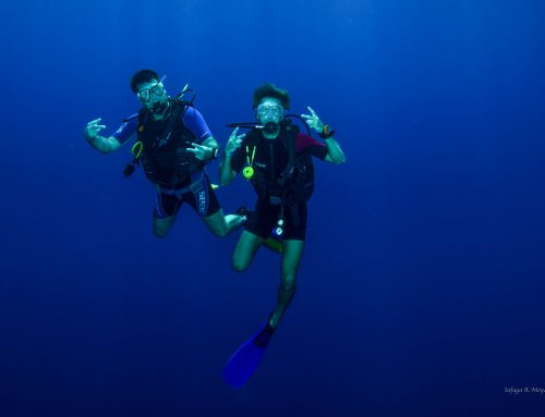 Your unforgettable diving holiday in 2018 with 3 Turtles Diving Center